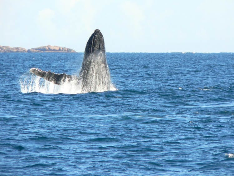 Whale Watching Tours, Augusta